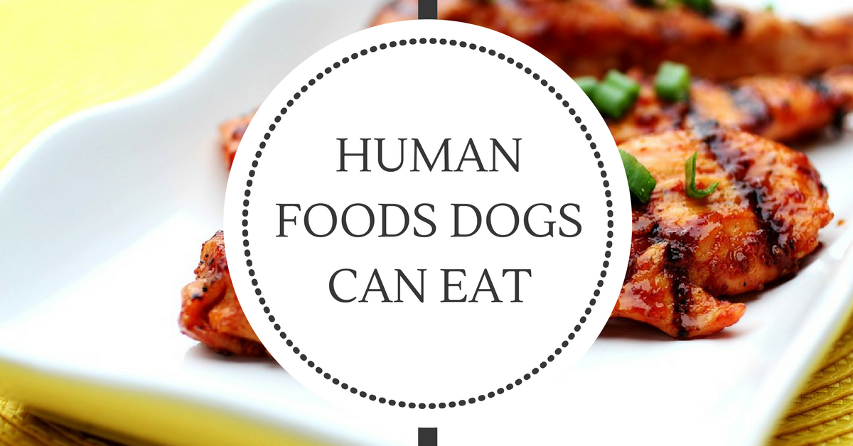 Human Foods Dogs Can Eat Featured Pic