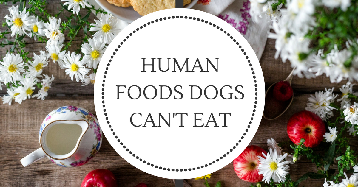 Human foods dogs can't eat