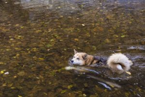 3 bonding exercises with your dog swimming