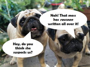 My Petential funny pugs